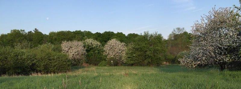 A view of the spring landscape at MBO, highlighted by the blossoming apple trees. (Photo by Simon Duval)